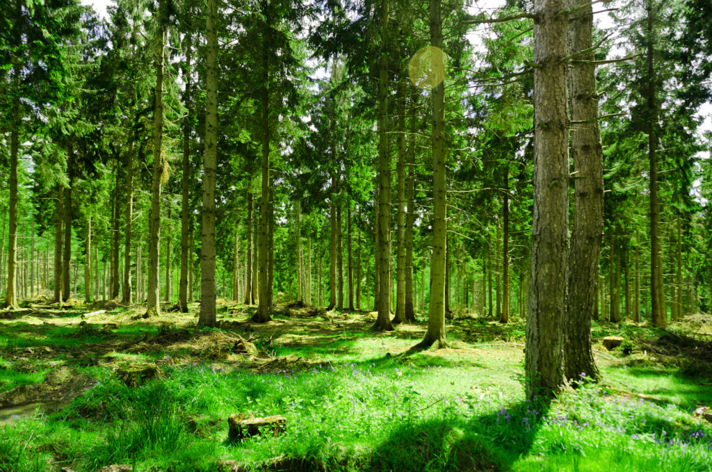 Skov om sommeren